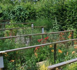 Rencontres à Chaumont sur Loire