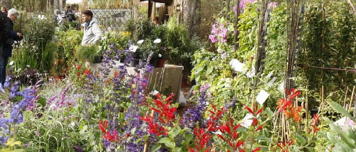 Exposition Vente de plantes